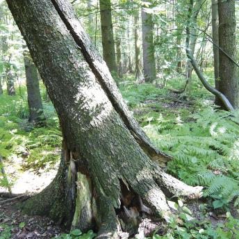 Dieser Baum muss weg