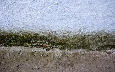 Feuchte Hauswand