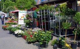 Pflanzenhof Paulwitz auf dem Wochenmarkt