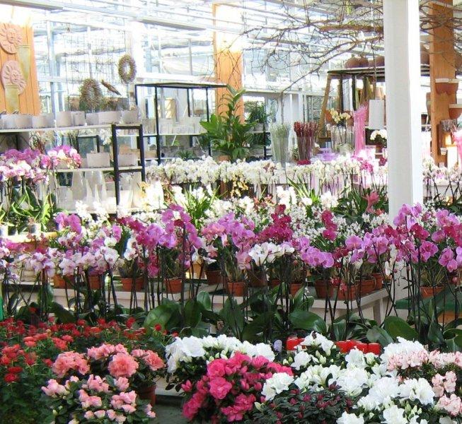 Pflanzenhof Paulwitz Blühpflanzenbereich