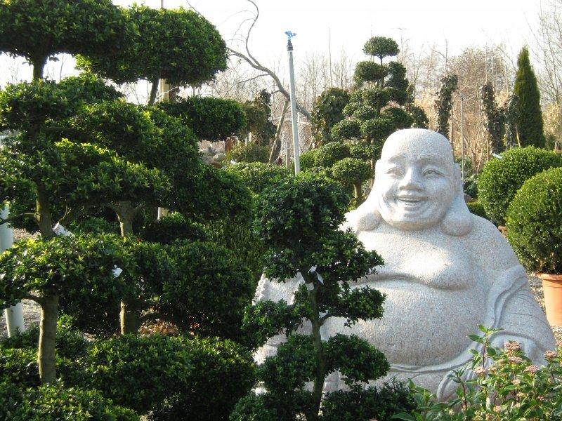 Bonsai und Budda
