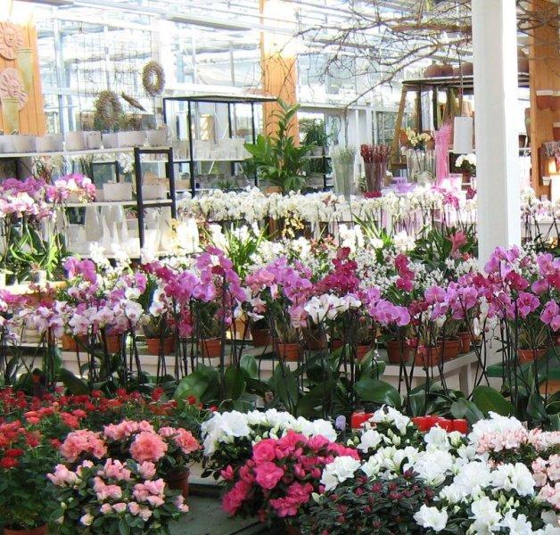 Orchideenausstellung bei Paulwitz