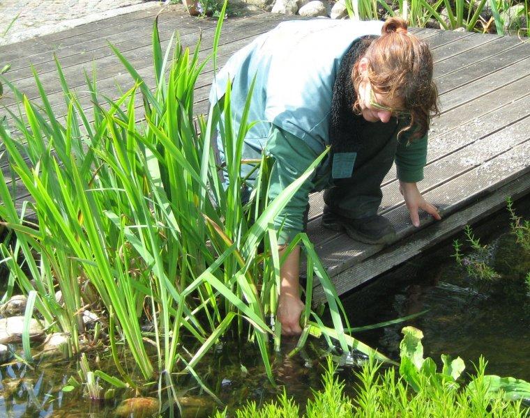 Teich saubermachen