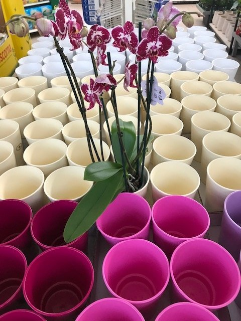 Orchideentöpfe
