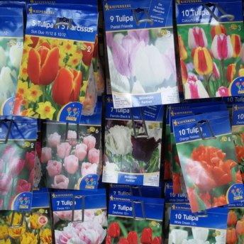 verschiedene Blumenzwiebeln