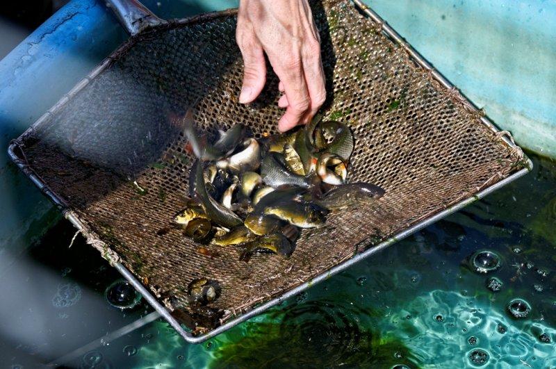 Besatzfische aus der Fischzucht Kemnitz