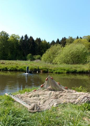 Fischzucht Kemnitz, Aukrug